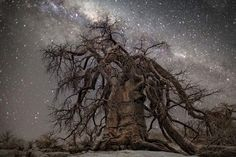Beth Moon   Starry Nights  If there is one complaint I can make about modern life in the city, it's the excess of light that totally disconnects us from the stars. What used to be a common sight a couple of centuries ago now looks like surreal pictures.   In this photographic project, Beth Moon captured the beauty of the stars along with gorgeous African trees. She took the pictures in Botswana during nightless moons, using only the light from the stars. http://www.bethmoon.com/