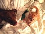 Follow us on Twitter @picksdog      This is Charlotte (1.5 years), a 50-pound pit bull mix and Oliver (3 months), a 2.5-pound kitten. They are