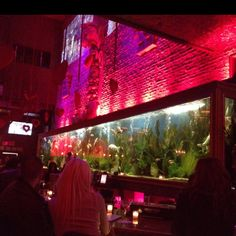 Now that is a fish tank.