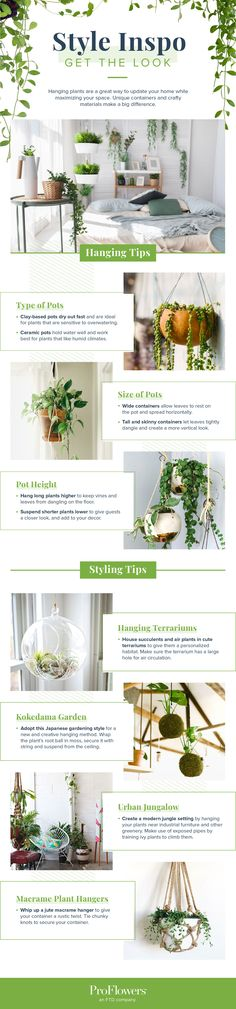 16 Indoor Hanging Plants to Decorate Your Home | ProFlowers
