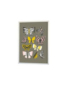50x70cm - Graphic Print - Butterfly family - Grey - Littlephant