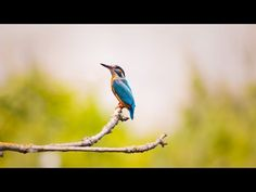 Nature Birds Sounds Music for Meditation and Relax, Massage and Autogenic Training Scenic Photography, Wildlife Photography, Animal Photography, Photography Tips, Digital Photography, Photography Essentials, Landscape Photography, Photography Backdrops, Photography Lighting