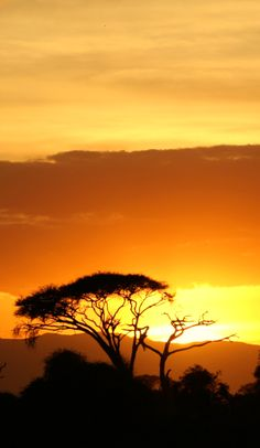 Experience a perfect sunset while on a #safari in Kenya.  www.Neilslinn.co.uk