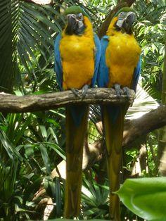 Die zwei Papageien fühlen sich wohl im Park ... #zooave #papagei