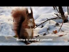 Winter Painting, New Year Greetings, Husky, Fox, Youtube, Cards, Animals, Christmas, Photography