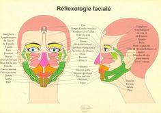 Tout comme les pieds, les mains, les oreilles et le dos, le visage a des zones réflexes correspondant aux divers organes et partie de notre corps. Comparez ces zones du visages à vos problèmes de santé. Trouvez-vous des similitudes ? Massez et stimulez ces zones. Cette thérapie s'appelle Réflexologie faciale. On travaille souvent ces points avec la pointe arrondie d'un stylet.