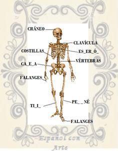 Partes del cuerpo: nombre de los huesos en español.