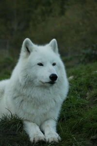 White Wolf Sanctuary in Tidewater, Oregon. Great experience!