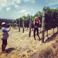 In the vineyard, in the spotlight, in their element. Wine Making, Day Tours, Day Trip, Spotlight, Vineyard, Couple Photos, Classic, Instagram Posts, Couple Shots