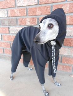 Water Repellant Snow and Rain Suit for Italian by hatz4brats, $55.00 ..... every dog needs one...lol!