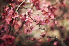 Branches Spring Flowers Pink Nature Focus Bokeh HD Wallpaper