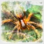 Spider power totem animal spirit guide  Written By Amber http://www.online-tarot-readings-by-amber.info  Some of the more common meanings for the spider power totem animal spirit guide are: •Integrate •Openness •Patience •Feminine energy •Creativity •Weaver of life's fate •Shadow self, dark aspects of life or personality  Read More: http://tarotamber75.wordpress.com/2014/11/18/spider-power-totem-animal-spirit-guide/