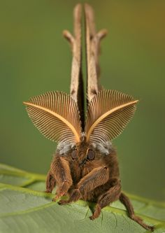 cool bug http://skylinepest.com/
