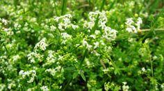 A fekete retek az egyik legnépszerűbb téli növény, mely nélkülözhetetlen vitaminokkal, ásványi anyagokkal és rosttal látja el a szervezetünket a szűkösebb hónapokban és nagyon jó hatással van az emésztésünkre is. Miért fogyasszuk még? Natural Remedies, Health Care, Spices, Health Fitness, Healing, Medical, Nature, Plants, Blog