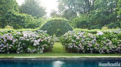 A swimming pool's clean lines highlight the natural charm of lush hydrangeas in this 1920s Shingle Style cottage in East Hampton, New York, designed by Robert Stilin.   - HouseBeautiful.com