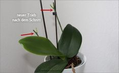 Neue Triebe nach dem Schnitt Source by ninaschaumann This short article, from respected author Phili Container Gardening, Gardening Tips, Potted Plants Patio, Vegetable Garden Planner, Growing Herbs, Indoor Garden, Indoor Herbs, Garden Planning, Houseplants