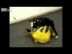 İşte Hayvanlar Aleminin En Komikleri