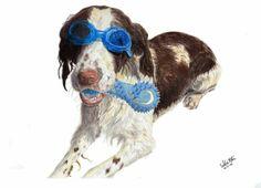 Charlie the Springer Spaniel #drawing #art #prismacolor #pencil #artwork #dog #pencildrawing