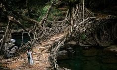 Rainforest of Meghalaya