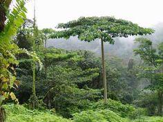 Parque Nacional del Monte Alen, uno de los destinos de nuestro viaje a Guinea Ecuatorial: http://www.telemadrid.es/mxm/madrilenos-por-el-mundo-guinea-ecuatorial