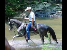 Blue Roan with CHROME Tennessee Walker FEARLESS Trail Horse!.wmv