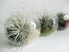 Small Hanging Air Plant Terrarium Your Choice by TheTropicalGarden