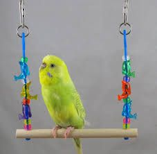 homemade budgie toys ideas - Google Search