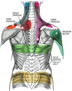 Many people suffer from muscle knots that can produce pain locally or in a referral pattern to another spot on the body away from the actual site of the muscle knot. These hard spots in the mus Massage Tips, Massage Techniques, Massage Therapy, Massage Benefits, Foot Massage, Remedial Massage, Trigger Point Therapy, Muscle Anatomy, Muscle Tension