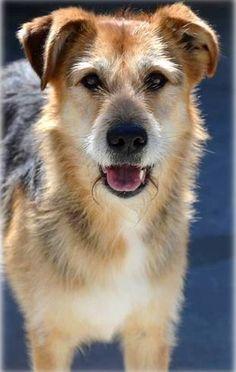Adoption, Animals, Dogs, Gatos, Senior Living Homes, Adopt A Dog, Pets, Foster Care Adoption, Animales