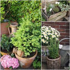 Patio (herbs & flowers)