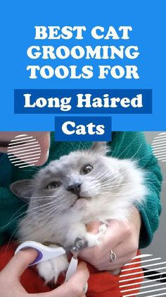 Grooming Salon, Cat Grooming, Long Cat, Long Haired Cats, Cat Supplies, Pet Health, Cat Breeds, Cool Cats, Cats And Kittens