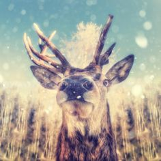Each year ending, we're looking at one picture for Christmas… Portrait of a deer with snowflakes by Sandra Dombrovsky.  Creative imagery for creative minds. Stockiste.com    Download Link: https://stockiste.com/display/portrait-of-a-deer-with-snowflakes/16935  #Stockiste, #Photographer, #SandraDombrovsky, #Photography, #StockPhotography, #ContentMarketing, #Marketing, #Storytelling, #StockisteCreativeStock, #Stockphoto, #Stockimage,  #CreativeWork, #Deer, #Reindeer, #Snow, #Peaceful…