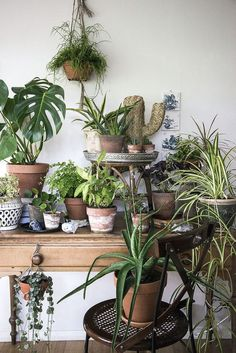 plants on plants...  Urban Jungle Bloggers: My Plant Gang by @mllepoirot