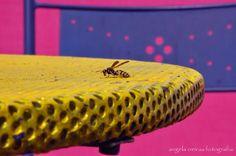 angela oeiras fotografia: Bee