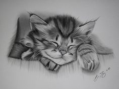 cute cat drawing by Grand Rapids Pencil Artist Brian Duey More Info: http://www.dueysdrawings.com/2005.html