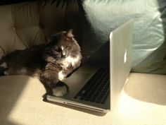 Proof read everything! Latin Words, Norwegian Forest Cat, Cairn Terrier, Brother, Laptop, Games, Happy, Cairn Terriers, Gaming