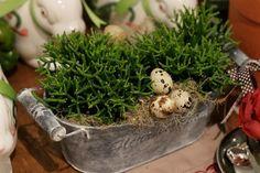 Páscoa - decoração de almoço country chic - arranjos de verde com ovos de codorna ( Arranjos: Lucia Milan )