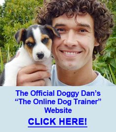 Doggy Dan Review: Why He Can Help You And Your Dog