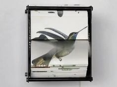 Spectacular Motorized Flipbooks of Hand-Drawn Birds -  Brooklyn-based artist Juan Fontanive
