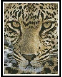 Mini Leopard Close Up