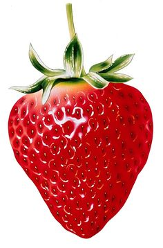 Fruit and Berries Photo Stock - - Webové albumy programu Picasa Strawberry Clipart, Strawberry Art, Strawberry Tattoo, Strawberry Bread, Strawberry Planters, Strawberry Spinach, Strawberry Cupcakes, Strawberry Desserts, Strawberry Lemonade