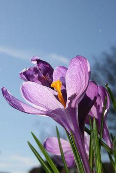 Voorjaar by ad de winter, via Flickr