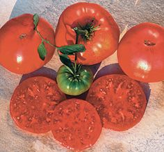 Crnkovic Yugoslavian (Seed Savers Exchange)--(Solanum lycopersicum) Brought into the U.S. by Yasha Crnkovic, a colleague of SSE member Carolyn Male. Heavy yields of pink beefsteak fruits which weigh up to a pound each. Fruits have near perfect shoulders that almost never crack. Delicious full tomato flavor. Indeterminate, 70-90 days from transplant.