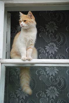 gatinhos pensativos