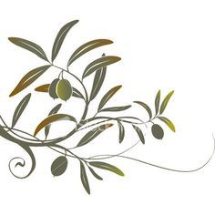 Olive branch drawing