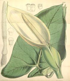 v.83 [ser.3:v.13] (1857) - Curtis's botanical magazine. - Biodiversity Heritage Library