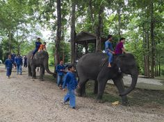 Trunk Therapy: How Elephants Are Helping Thailand's Autistic Kids - NBC News
