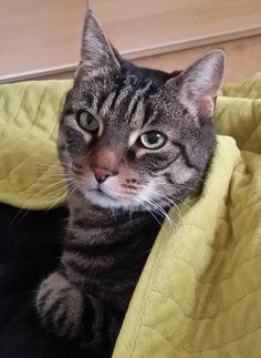 Pirx Cat | Pawshake