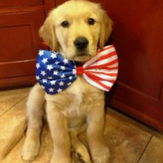 Patriotic puppy - love this~ Cute Puppies, Cute Dogs, Dogs And Puppies, I Love Dogs, Puppy Love, Baby Animals, Cute Animals, Baby Dogs, Mans Best Friend