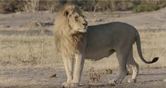 If you care about the future of hunting, you'll fight the lies spread by anti-hunters by helping spread this video on the benefits of trophy hunting in Africa.
